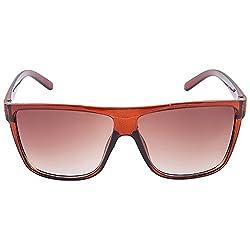 Allen Cate Brown Stylish Wayfarer Sunglasses
