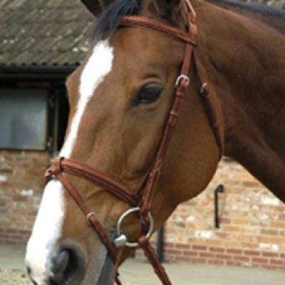 Mark Todd DeLuxe Bridle with Crank- Dark Havanna-Full