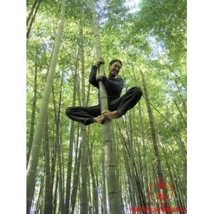 Bamboo Seeds Giant Moso 25+ Seeds Phyllostachys Pubescens Eco Conscious Screening