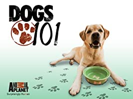 Dogs 101 Season 3