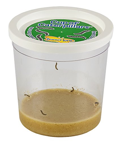 Insect Lore Live Cup of Caterpillars (Painted Lady Butterfly Kit compare prices)
