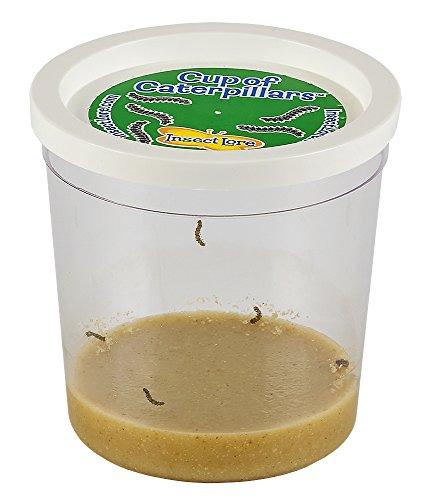 caterpillar-refill-voucher-for-butterfly-garden-set