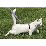 "Come With Me Kitty Harness and Bungee Leash Size: Large (8"" H x 5.25"" W x 1.25"" D), Color: Red"
