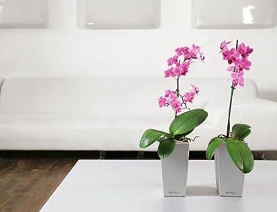 Lechuza Premium Mini Cubico 9cm High Gloss Taupe Self Watering Houseplant & Herb Planter Pot