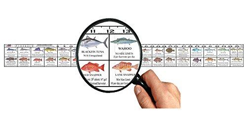 Florida saltwater fish ruler decal fishing tools help for Alabama game and fish regulations