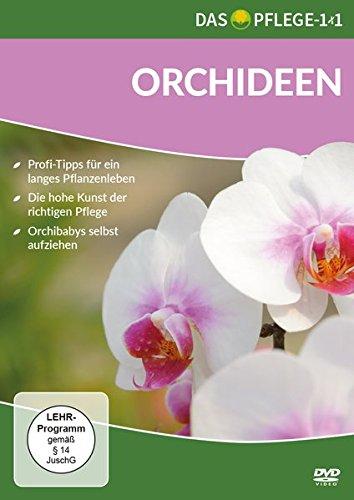 das-pflege-1x1-orchideen