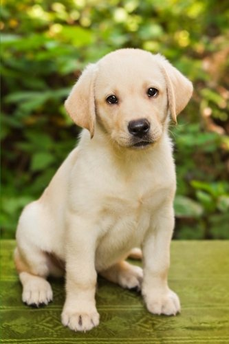 The Labrador Retriever Puppy Dog Journal: 150 page lined notebook/diary