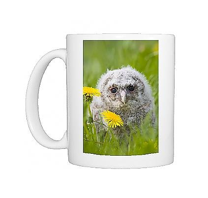 Photo Mug Of Tawny Owl - Youngster In Meadow front-1087066