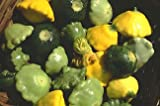 Renee&#39;s Garden Seeds - Squash Pattypan Tricolor - Summer Scallop Trio