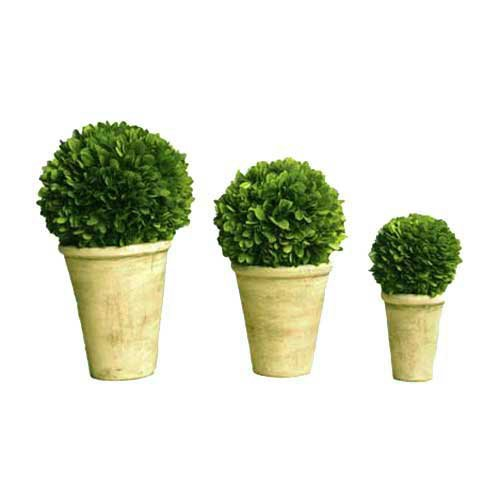Preserved Boxwood Ball In Pot 3pc Set (4