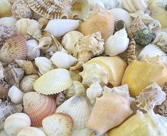 how to decorate wreaths and photo frames with seashells