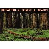 Oregon Postcard Gb098Bp Redwood Forest