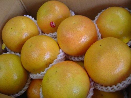 フルーツyamakiti フロリダ産ルビーグレープ 大サイズ15玉~16玉