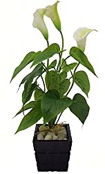 Fourwalls Polyurethane Artificial Real-Touch Calla Lily Plant (Green, 50 cm)