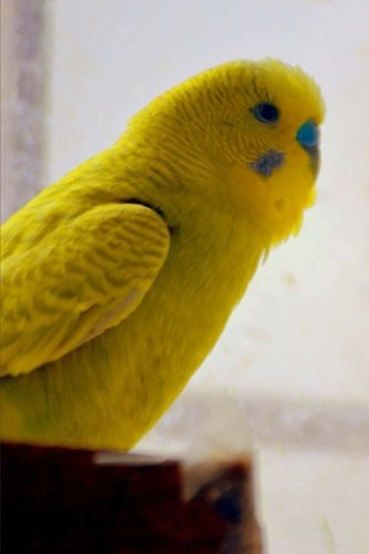 yellow-parakeet-birds-of-the-world-blank-150-page-lined-journal-for-your-thoughts-ideas-and-inspirat