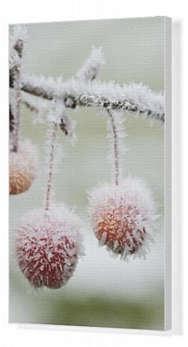 Seasonal Fruits Winter