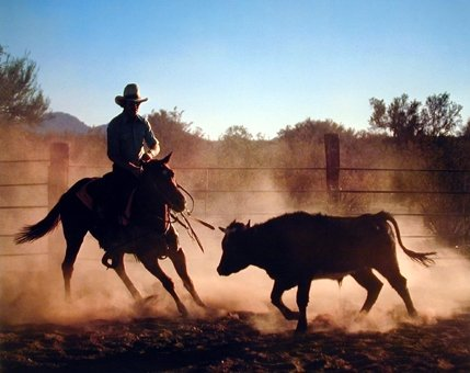 Western Cowboy on Cutting Wild Horse Animal Bedroom Decor Art Print Poster (16x20) (Rodeo Pictures compare prices)