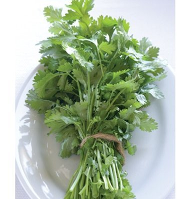 davids-garden-seeds-herb-cilantro-santo-d919-green-500-open-pollinated-seeds