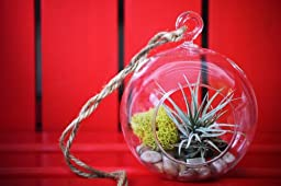9GreenBox - Air Plant - Terrarium Kit with Moss and Pebbles