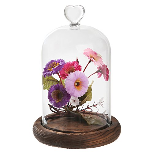 7 inch Mini Clear Glass & Wood Cloche Bell Jar Centerpiece / Tabletop Display Case w/ Heart Handle