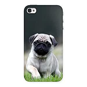 Cute Pug Dog Grass Multicolor Back Case Cover for iPhone 4 4s
