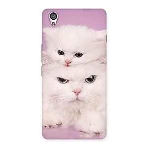 Premium Kitten Family Back Case Cover for OnePlus X