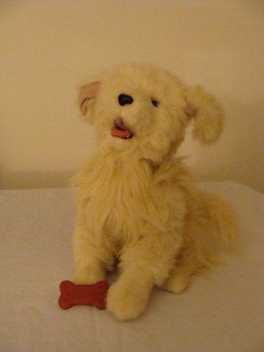 Real Stuffed Animals