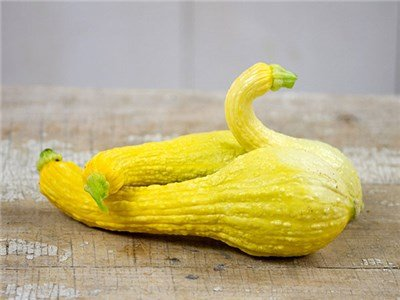 30 - Early Summer Crookneck Squash Seeds - Non-Gmo - Combined Shipping front-93503