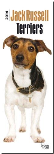 Jack Russell Terriers 2014 - Jack Russell Terrier: Original BrownTrout-Kalender - Slimline [Mehrsprachig] [Kalender], Buch