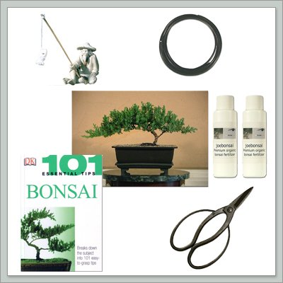 Joebonsai - Do It Yourself Bonsai Tree Starter Kit with Juniper - Buy Joebonsai - Do It Yourself Bonsai Tree Starter Kit with Juniper - Purchase Joebonsai - Do It Yourself Bonsai Tree Starter Kit with Juniper (joebonsai, Home & Garden,Categories,Patio Lawn & Garden,Plants & Planting,Outdoor Plants,Outdoor Bonsai)