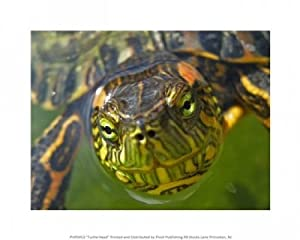 Turtle Head Poster (10.00 x 8.00)