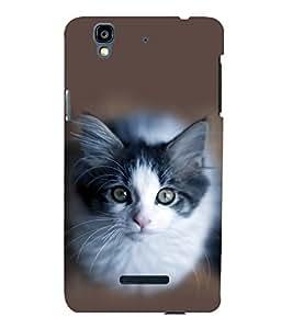 printtech Cute Kitten Eyes Back Case Cover for YU Yureka::Micromax Yureka AO5510