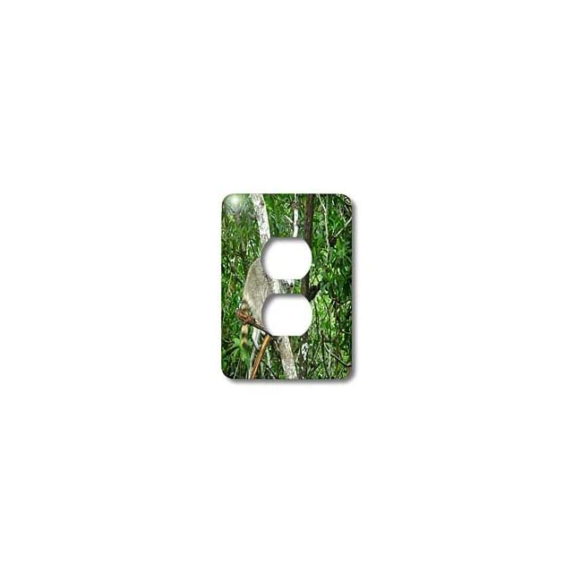 lsp_162831_6 Florene Animals   Florida Everglades Racoon   Light Switch Covers   2 plug outlet cover