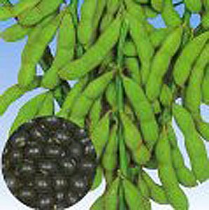 Seed Order From Kitazawa Seed Company - YouTube