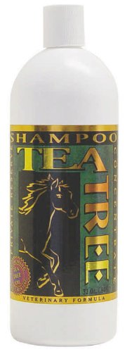Healing tree Private Reserve Tea Tree Shampoo 32 oz. for Hor