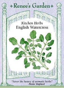English Watercress Seeds 3000 Seeds