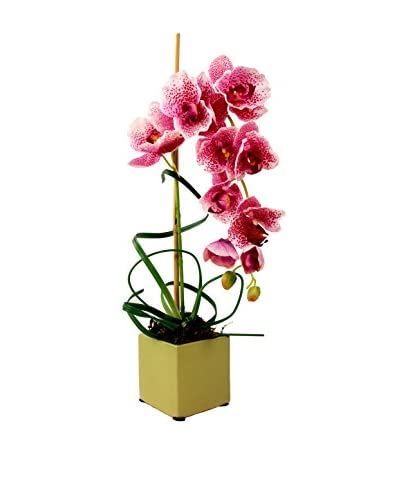 Creative Displays Spotted Phalaenopsis Arrangement, Pink/Green
