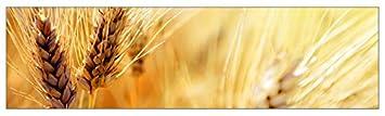 mySPOTTI  251039 profix Korn, Kuchenruckwand, 220 x 60 cm
