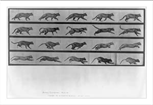 Historic Print (M): [Leopard leaping]