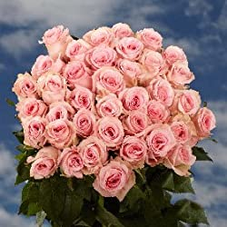 Beautiful Mother's Day Roses | Gorgeous 50 Pink Roses by Global Rose