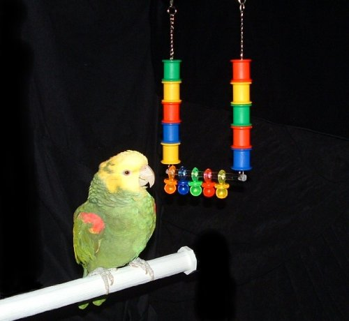 Cheap Back to Spool Bird Toy for Amazon and African Grey Parrots (Junior) (B003RAHLNY)