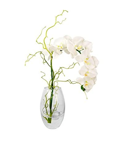 Creative Displays Inc. Phalaenopsis Orchid Crystal Vase, White/Green