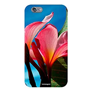 Homesogood Beautiful Petals Multicolor Case For iPhone 6S (Back Cover)