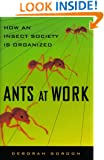 Ants At Work: How An Insect Society Is Organized