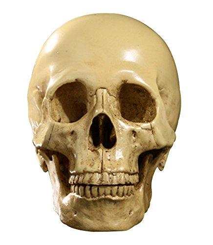 Generico Scala 1: 1 Cranio In Resina Umano Scheletro Decorativo Per Feste Halloween - Beige