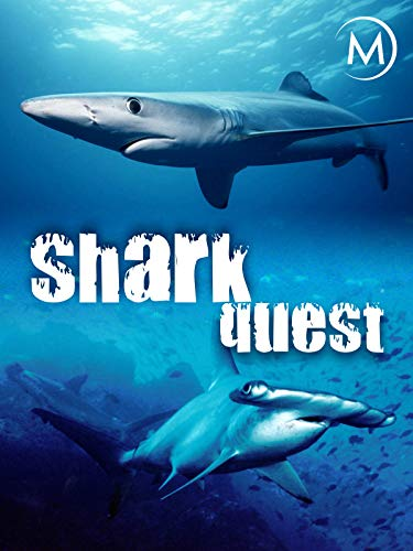 Shark Quest on Amazon Prime Video UK