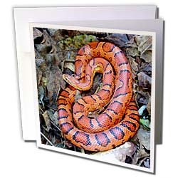 Snakes CORN SNAKE Greeting Cards 6 Greeting Cards with envelopes