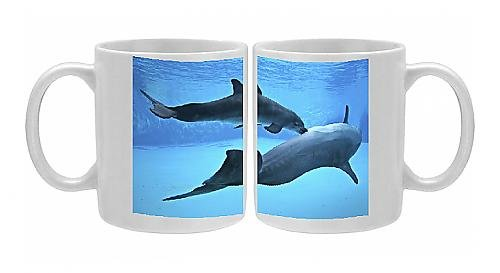 Photo Mug Of Bottlenose Dolphin - Newborn Baby / Calf Nursing / Feeding From Mother front-1039193