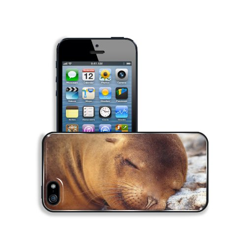 Seal Fur Seal Dream Baby Apple Iphone 5 / 5S Snap Cover Premium Leather Design Back Plate Case Customized Made To Order Support Ready 5 Inch (126Mm) X 2 3/8 Inch (61Mm) X 3/8 Inch (10Mm) Liil Iphone_5 5S Professional Case Touch Accessories Graphic Covers front-737227