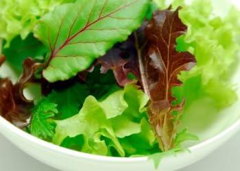 ベビーリーフ 6パック(大) 洗わず食べられる植物工場産【完全無農薬/沖縄産】